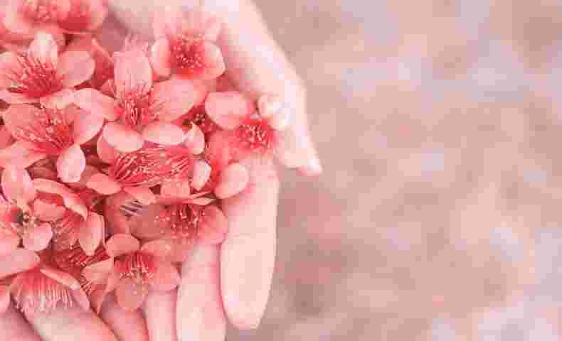 手の平いっぱいの花びら